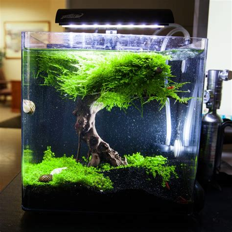 aquascaping tropical fish tank 17 best images about nano planted tank on pinterest vase