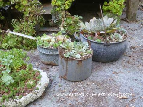 unique planters for succulents 21 unique succulent planters summer ideas
