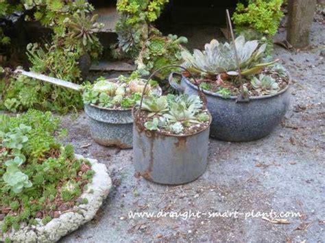 unique planters 21 unique succulent planters summer ideas