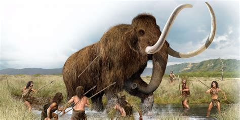 mammoth images woolly mammoths could be brought back soon business insider