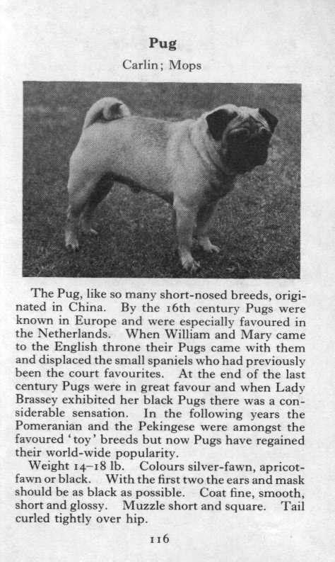 pug description pug vintage prints pictures paintings gifts and artwork for