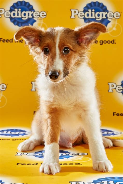 puppy bowl 2016 puppy bowl 2016 rixton reel with