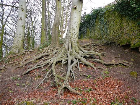 0008218439 the hidden life of trees living on earth the hidden life of trees