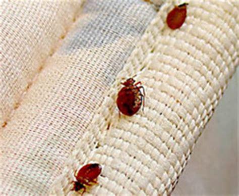 bed bugs phoenix phoenix bed bug treatment bed bug extermination guaranteed