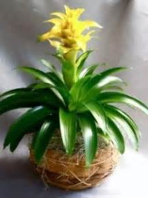 house plant types 1000 images about flora indoor plants on pinterest house plants indoor house plants and