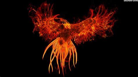 phoenix bird wallpaper wallpapersafari