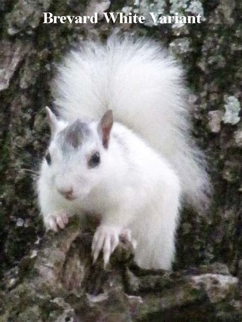 Deer Head by What Is A White Squirrel Heart Of Brevard