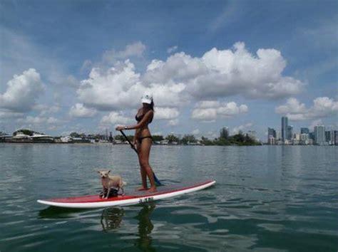 boarding miami paddleboarding in miami fl 03302011