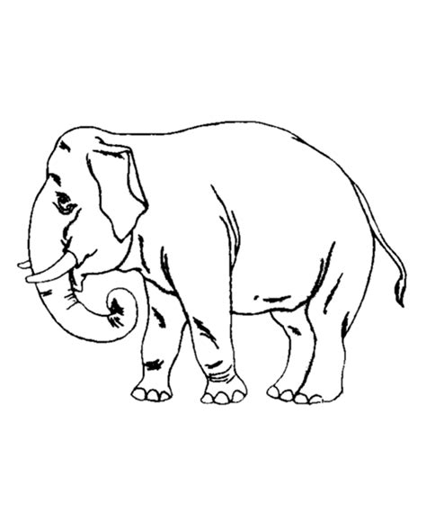 preschool coloring pages elephant old elephant coloring pages for preschool 2013 coloring