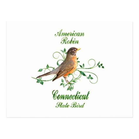 robin connecticut state bird post card zazzle