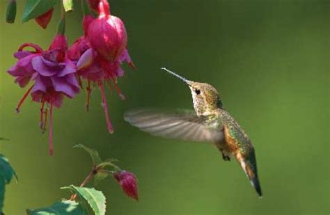 wild birds unlimited where should i hang my hummingbird
