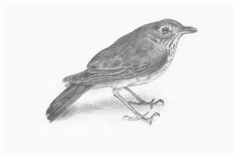 pencil sketch bird by a x designs on deviantart