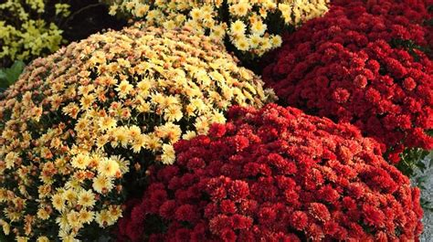 what do you plant in a fall garden 324 best images about gardening plants and flowers on