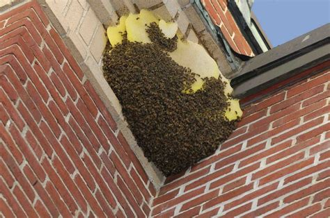 hive homes bee removal and control services