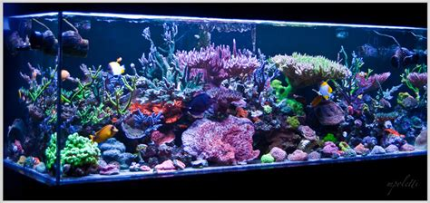 Aquascapes Online Reefkeeping Magazine April 2014 Tank Of The Month