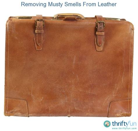 how to remove mold from leather couch removing musty smells from leather tips and to grow