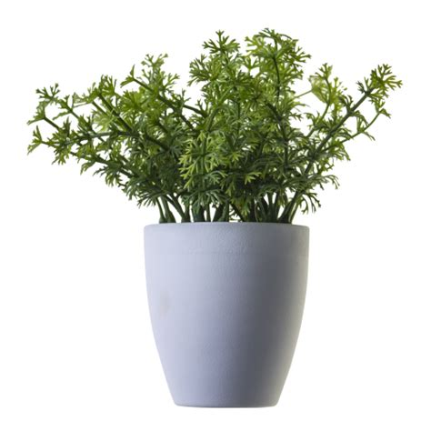 Herb Pot by Potted Plants And Flowers Png