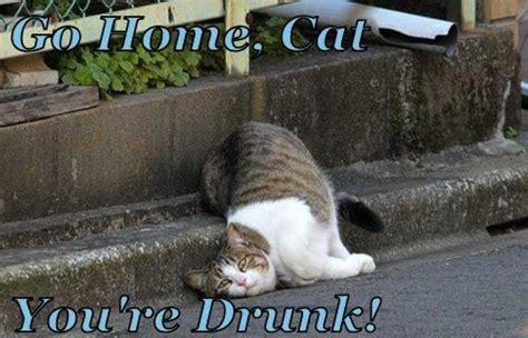 Drunk Cat Meme - way too funny lolcat meme meets quot go home you re drunk