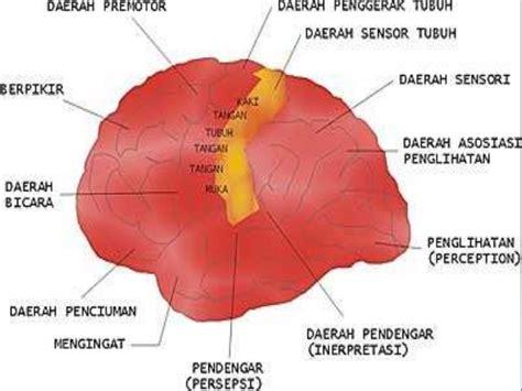 Otak Otakku otak