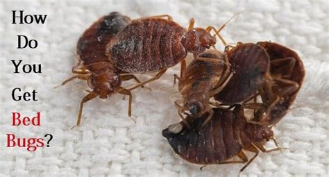 how do you catch bed bugs how do you get bed bugs