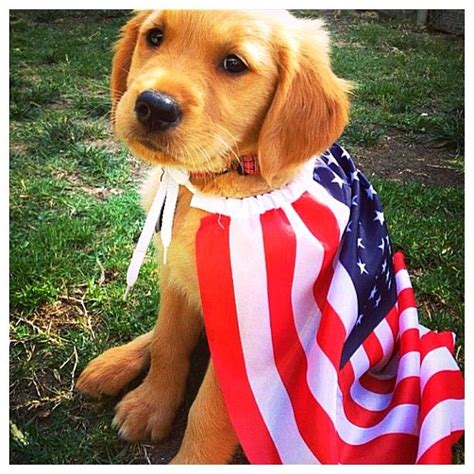 patriotic puppy independence day special cutest pictures of patriotic animals animals zone