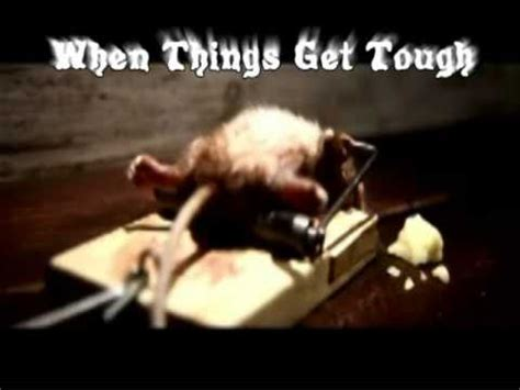 mouse benching mouse trap the mouse that didn t give up youtube
