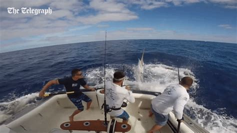 fishing boat gif fishing marlin gif by the telegraph find share on giphy