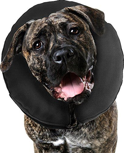 best e collar for dogs top 5 best recovery cones e collars for dogs 2017