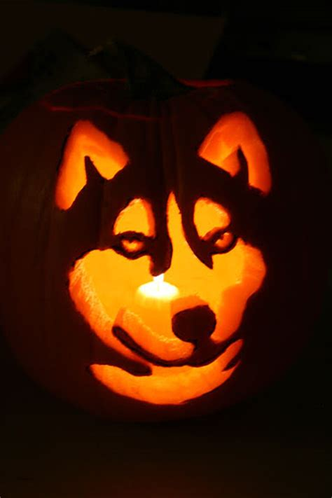 puppy pumpkin carving husky pumpkin template in ivan feels like carving his own pumpkin haha but