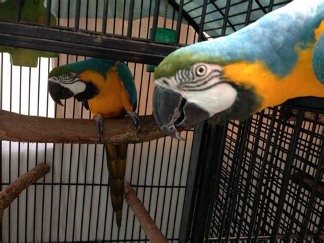 parrot boarding facility expert advice and information