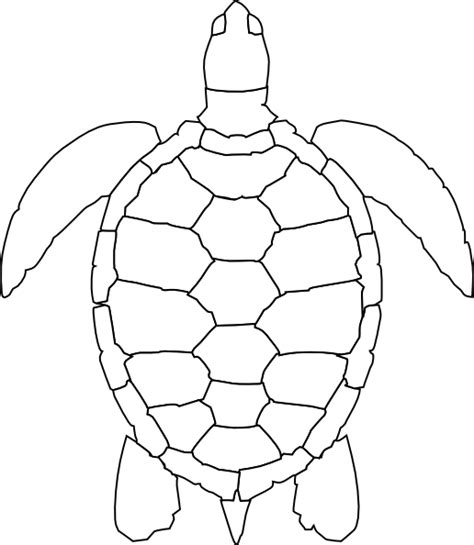 turtle pattern drawing how to draw turtle shell pattern clipart best
