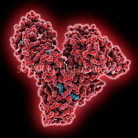 Serum Spl human serum albumin molecule stock image c015 6939 science photo library