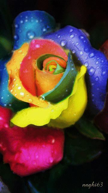 colorful gif animated rainbow colorful flowers rainbow animated