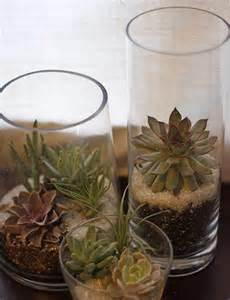 how to make a succulent planter 15 best indoor succulent planting ideas that can beautify your home balcony garden web