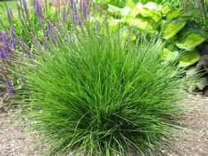 grasses kaste design landscaping inc