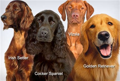 webmd for dogs breeds quiz how well do you your breeds