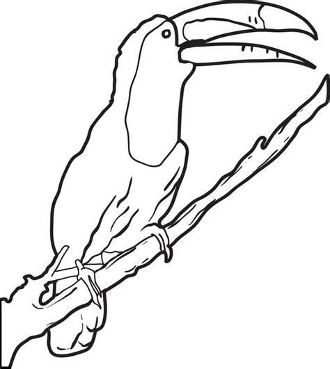 coloring page of a toucan bird cute toucan coloring coloring pages