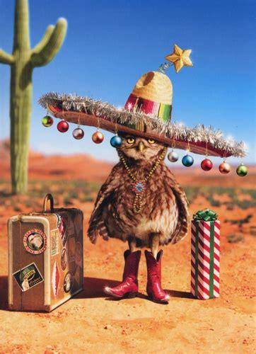 holiday owl funny christmas card  avanti press