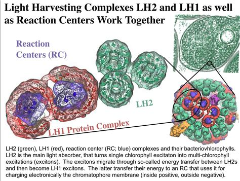Light Harvesting Complex by Nanohub Org Resources Illinois Phys550 Lecture 2
