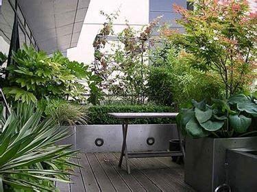 piante da cortile oltre 1000 idee su piante da balcone su piante