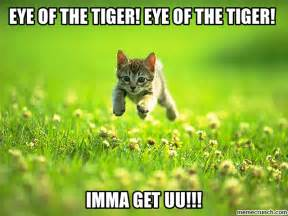 Eye Of The Tiger Meme - eye of the tiger eye of the tiger