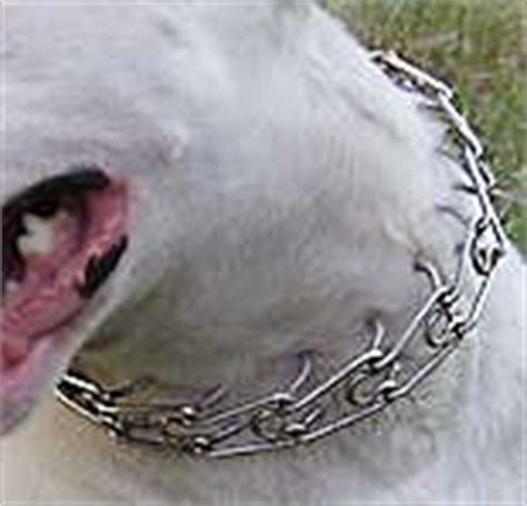 how to use a pinch collar for the use of aversives an introduction puggles pitties
