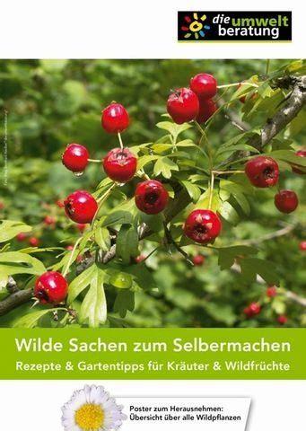 Wilde Pilze Im Garten by 220 Ber 1 000 Ideen Zu Essbare Pilze Auf Pilze