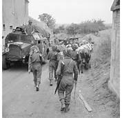 British Troops Herd Cattle Past A Morris Quad