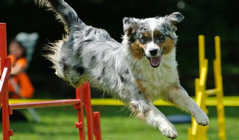 how to agility agility competitions how to start science on risks pros cons