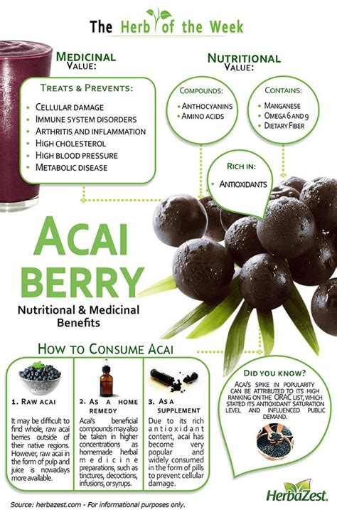best acai berry best 25 acai benefits ideas on