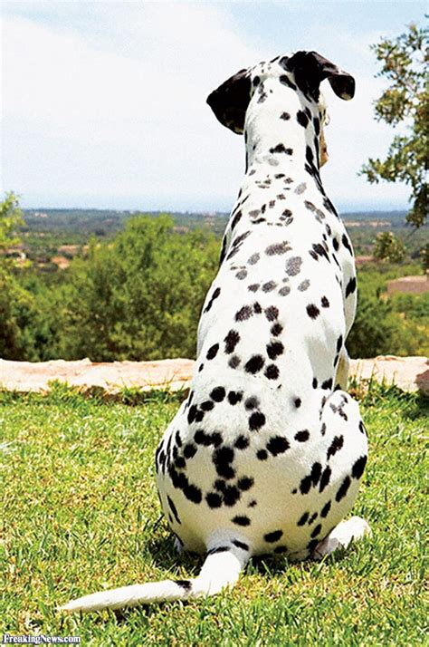 dogs with spots with 2008 spots pictures freaking news