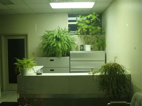 best office desk plants interior office plants part 10