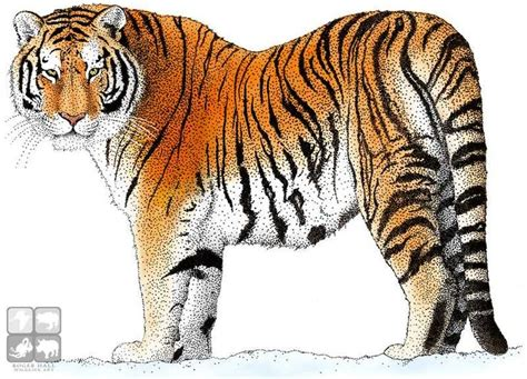 Inidia Cat 23 10 best a teenagers guide to survival tiger illustration