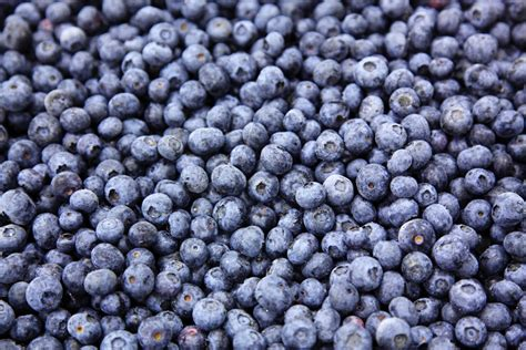 Dried Blueberries 600 Gram Blueberry Kering 600gr rjt blueberry park inc